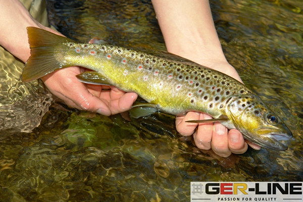 Fishing line for trout- GER-LINE®